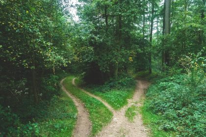 the paths diverging in the woods, an apt metaphor for living our faith as UUs.